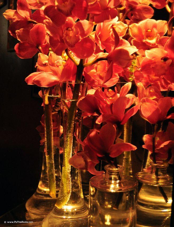 Clos Maggiore orchids