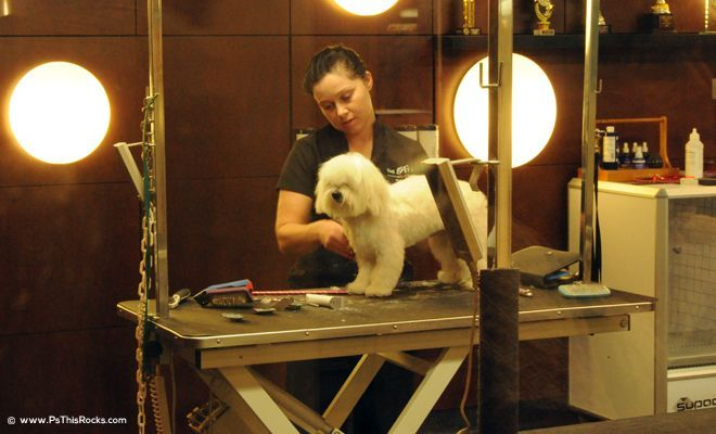 Dogs Shop