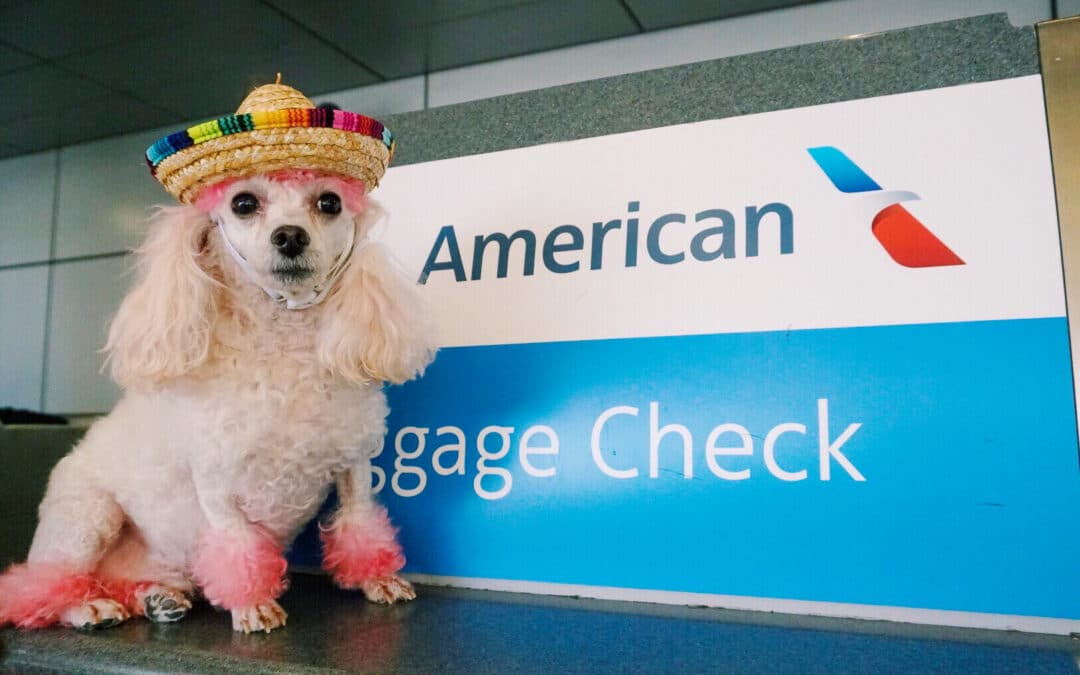 Best Airlines To Fly To Europe With Pets, 21 Best Airlines To Fly To Europe With Pets & Animals From America To Europe