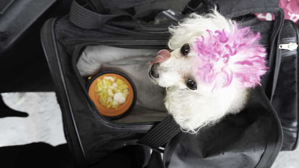 pet travel checklist, Don't Ruff It! Use My Pet Travel Checklist & Tips When Traveling With A Dog, Cat, or Animal
